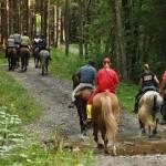 תאונות רכיבה על סוס